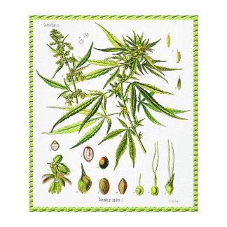 Canvas do desenho da Botânica do vintage da planta