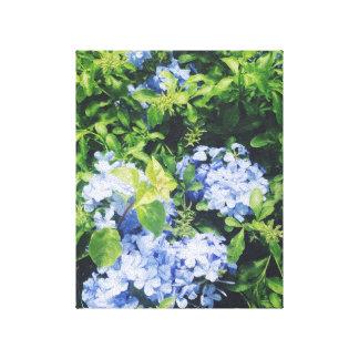 Canvas do Hydrangea