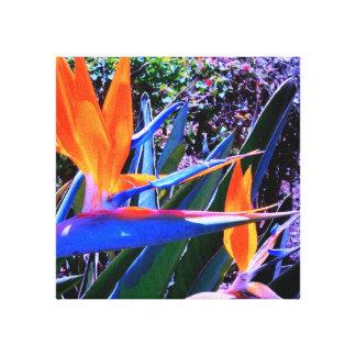Canvas do Pássaro--Paraíso Impressão De Canvas Esticada