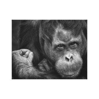 Canvas do primata do orangotango