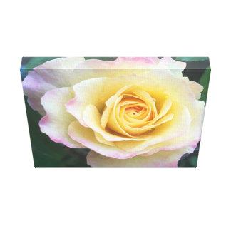 Canvas do rosa cor-de-rosa & amarelo