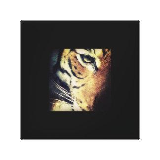Canvas do tigre