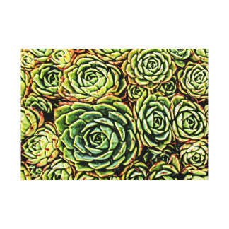 Canvas dos Succulents