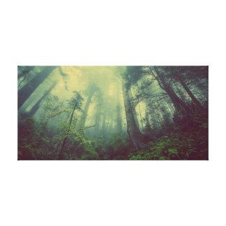 Canvas enevoadas da floresta