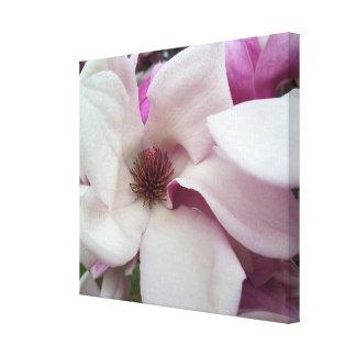 Canvas - envolvidas - flor da magnólia de pires