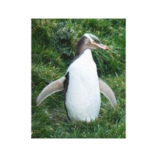 Canvas Eyed amarelo pstas em perigo do pinguim