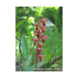 """Canvas listradas 16"""" da orquídea de Coralroot x"""
