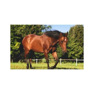 canvas marrons do cavalo