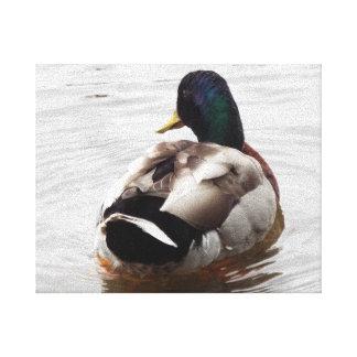 Canvas - pato da natação