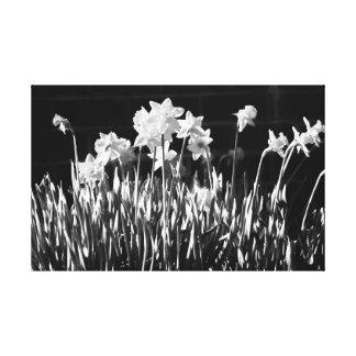 Canvas preto e branco do Daffodil