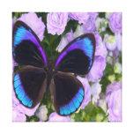 Canvas roxas do prêmio da borboleta impressão de canvas esticada