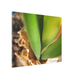 Canvas verdes da flor impressão de canvas esticadas