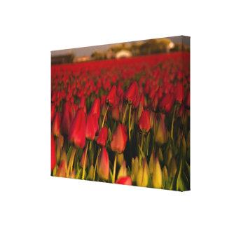 Canvas vermelhas do solteiro da paisagem de