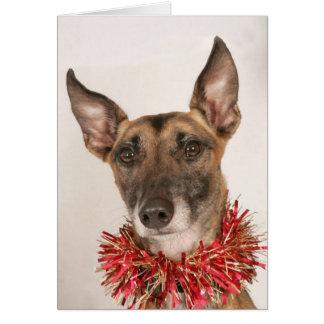 Cartões de Natal com Cachorros na Zazzle