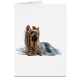 Cão australiano da exposição de cães de Terrier de Cartão