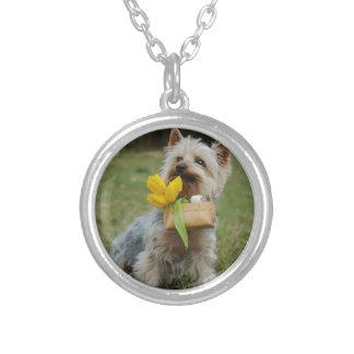 Cão australiano de Terrier de seda Colar Banhado A Prata