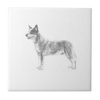 Cão australiano do gado azulejo quadrado pequeno