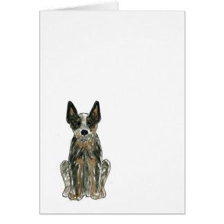 Cão australiano do gado cartão comemorativo