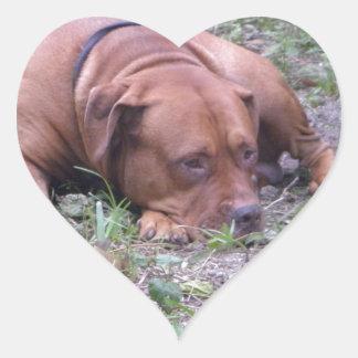 Cão bonito de Bull do Vermelho-Nariz Adesivo Coração