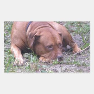 Cão bonito de Bull do Vermelho-Nariz Adesivo Retangular