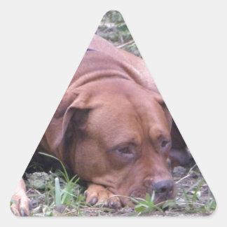 Cão bonito de Bull do Vermelho-Nariz Adesivo Triangular