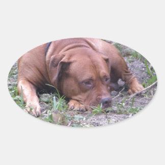 Cão bonito de Bull do Vermelho-Nariz Adesivos Ovais
