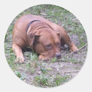 Cão bonito de Bull do Vermelho-Nariz Adesivo Redondo