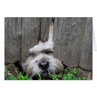 Cão bonito do artista de escape, cartão do filhote