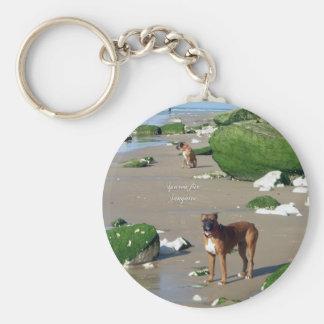 Cão bonito na praia com pedras do fungo chaveiros