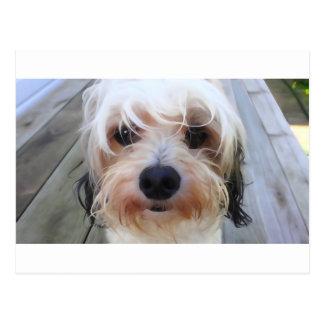 Cão bonito no cartão do banco