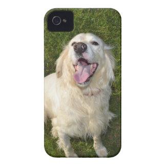 Cão branco capa para iPhone 4 Case-Mate