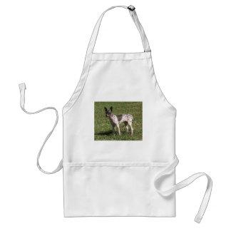 Cão calvo americano de Terrier Avental