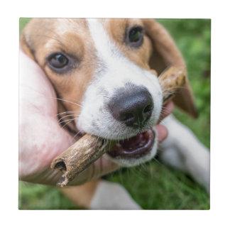 Cão com vara