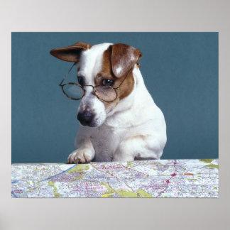 Cão com vidros de leitura que estuda o mapa pôster