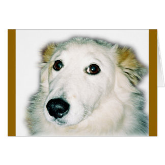 cão culpado cartão comemorativo