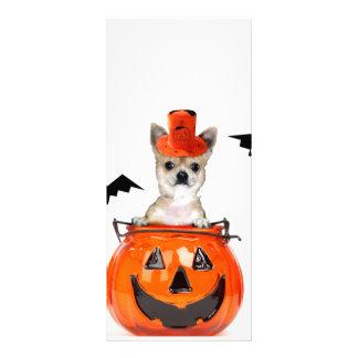 Cão da chihuahua do Dia das Bruxas 10.16 X 22.86cm Panfleto