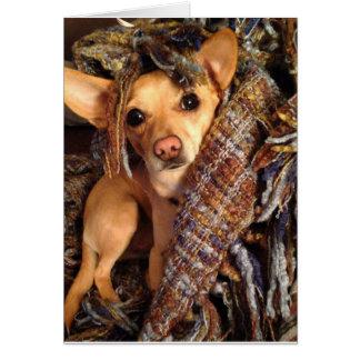 Cão da chihuahua no cartão geral