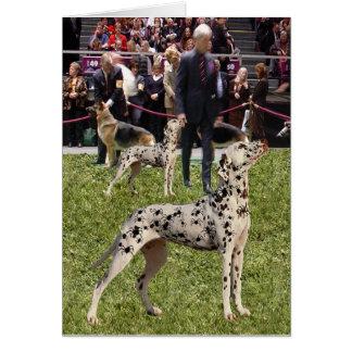 Cão Dalmatian engraçado da mostra Cartão Comemorativo