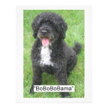 Cão de água português de Barack Obama Modelo De Panfletos