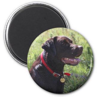 Cão de arma de Labrador Ímã Redondo 5.08cm