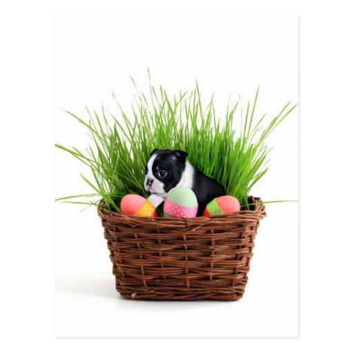 Cão de Boston Terrier da páscoa Cartões Postais