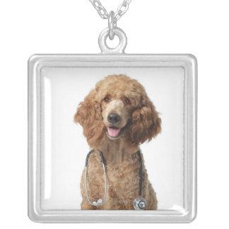 Cão de caniche dourado que veste um estetoscópio colar com pendente quadrado