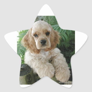 Cão de cocker spaniel do americano e a samambaia adesivo estrela