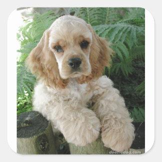 Cão de cocker spaniel do americano e a samambaia adesivo quadrado