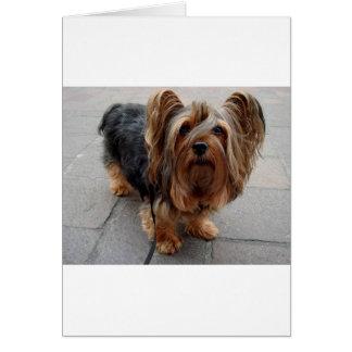 Cão de filhote de cachorro australiano de Terrier Cartão