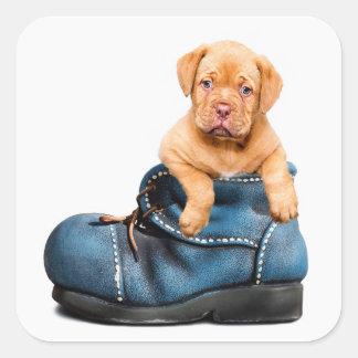 Cão de filhote de cachorro bonito em uma etiqueta