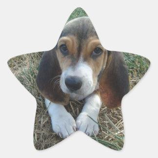 Cão de filhote de cachorro de Artésien Normand do Adesivo Estrela