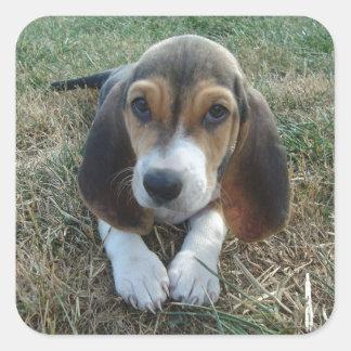 Cão de filhote de cachorro de Artésien Normand do Adesivo Quadrado