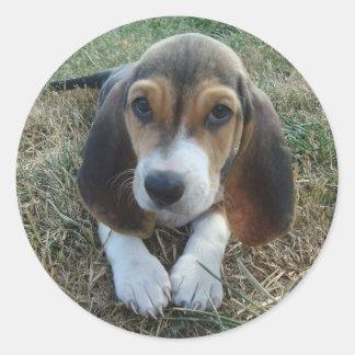 Cão de filhote de cachorro de Artésien Normand do Adesivo Redondo