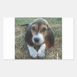 Cão de filhote de cachorro de Artésien Normand do Adesivo Retangular